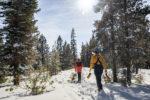 Snowshoeing Woods